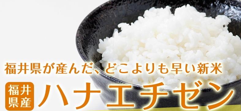 福井県が産んだ、どこよりも早い新米 ハナエチゼン 新米が早くも入荷しました!