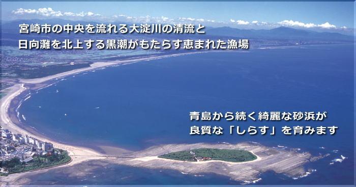 青島から続く綺麗な砂浜が良質な「しらす」を育みます