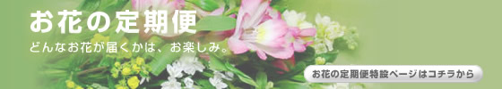 お花の定期便 ゆうパック便送料無料です。