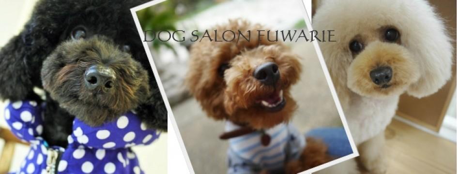 DOG SALON FUWARIE