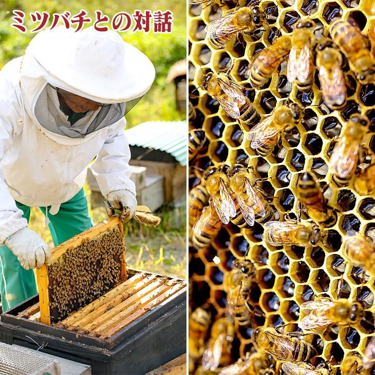 ミツバチとの対話