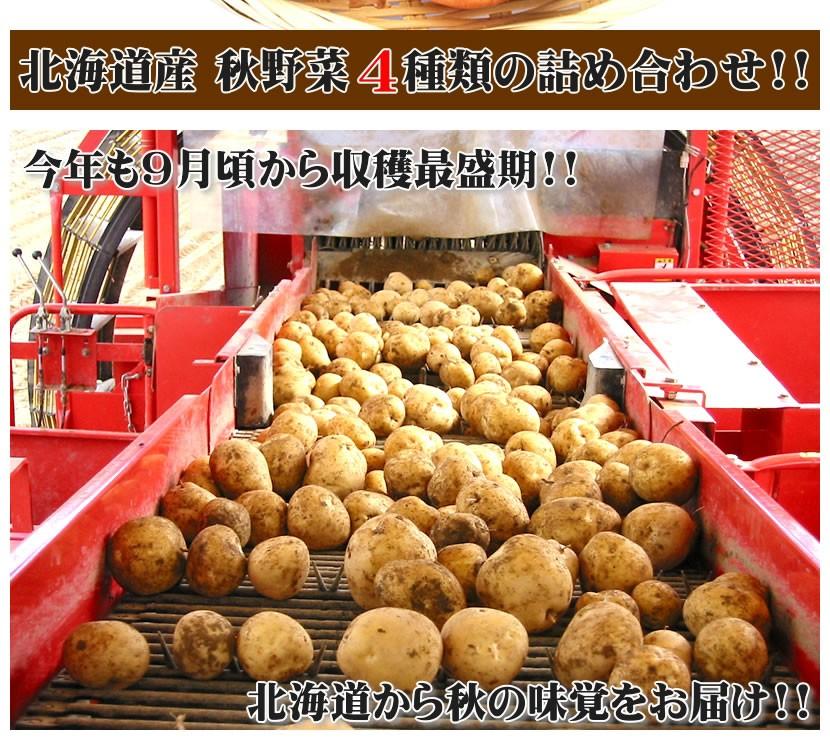 北海道産 秋野菜セット