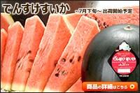 北海道産 でんすけすいか