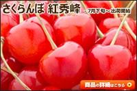 北海道産 さくらんぼ 紅秀峰