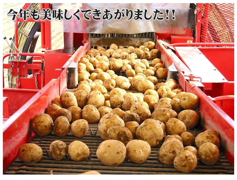 北海道産 じゃがいも 品種お任せ 10kg