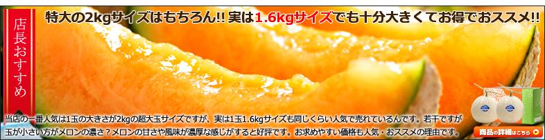 北海道 富良野メロン 1玉 1.6kgサイズ各種