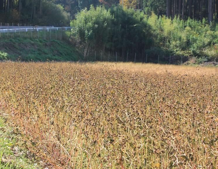 有機はと麦・有機黒豆・国産そば茶・有機コーン茶