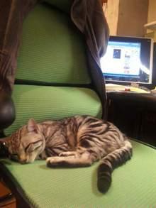 エルゴヒューマンで 西原理恵子さんの猫ちゃん