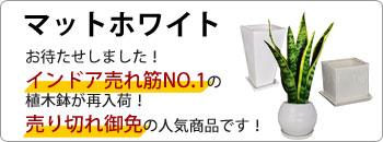 マットホワイト植木鉢