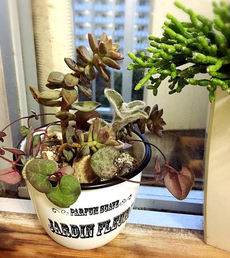 多肉植物の寄せ植え2