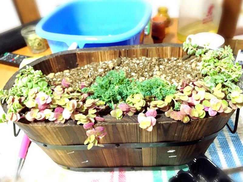 多肉植物の寄せ植え6