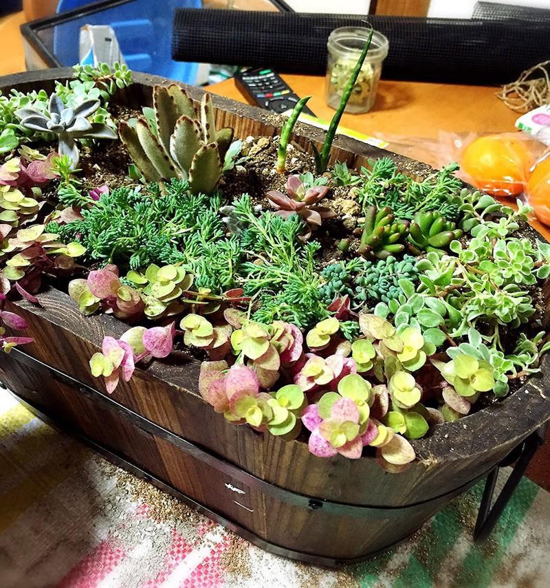 多肉植物の寄せ植え7