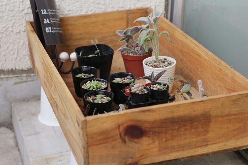 多肉植物の寄せ植え14
