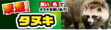 撃退!タヌキ
