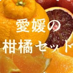 愛媛の美味しい柑橘、紅まどんな、甘平、温州ミカンなどのジェラート アイスクリームのセット