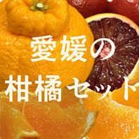 愛媛の柑橘ジェラート セット