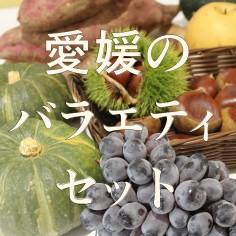 愛媛の美味しい柑橘にサツマイモや梨、桃など農作物のジェラート アイスクリームのバラエティ セット