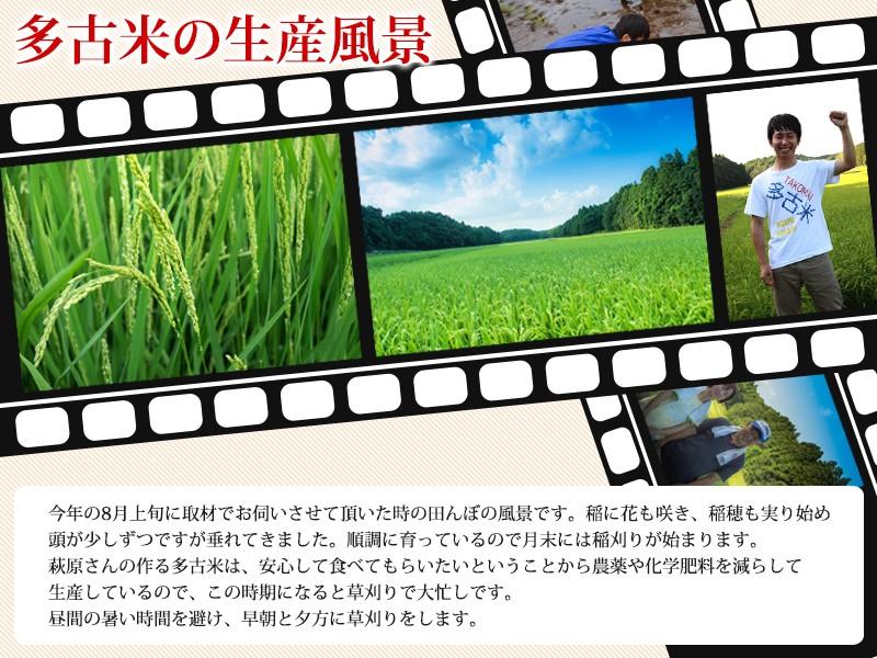 多古米生産風景
