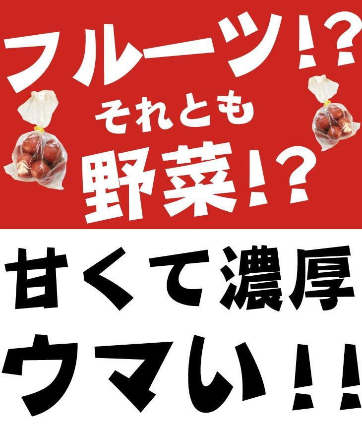 フルーツトマト とまと 栃木県 送料無料 通販 お取り寄せ ギフト