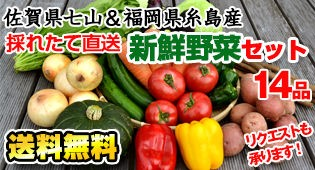 送九州佐賀七山&福岡糸島の産直野菜