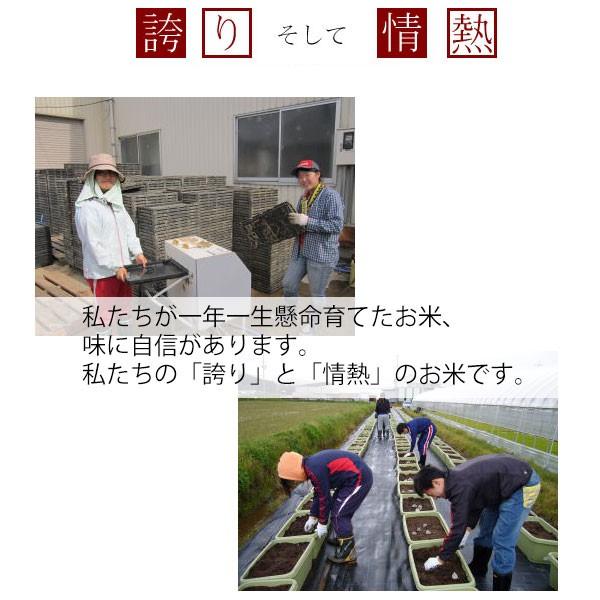 丹波篠山,減農薬栽培コシヒカリの田植え風景