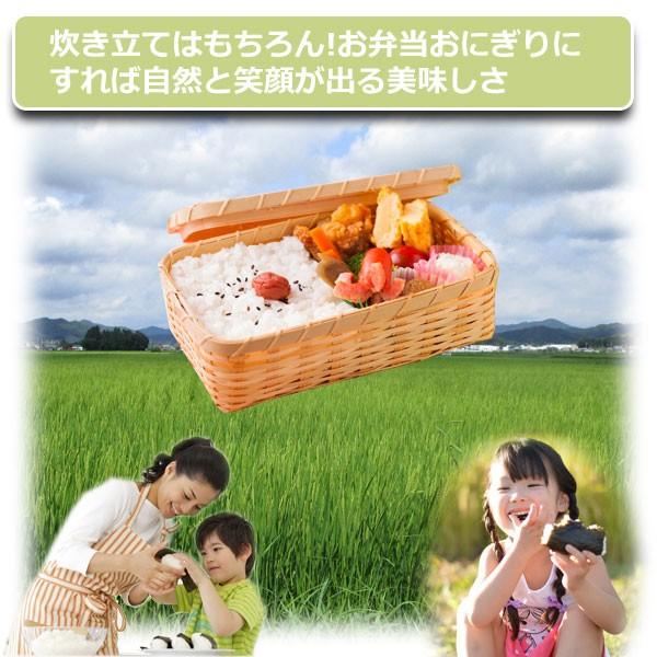 丹波篠山,減農薬栽培コシヒカリの,田淵さん達の仲間