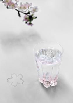 sakurasaku glass / サクラサクグラス
