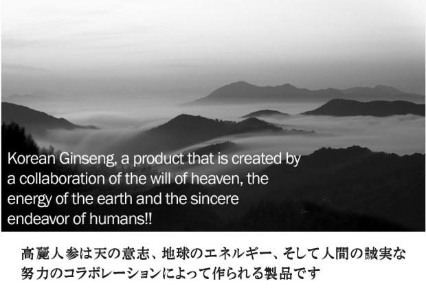 高麗人参は天と地球と人のコラボレーション