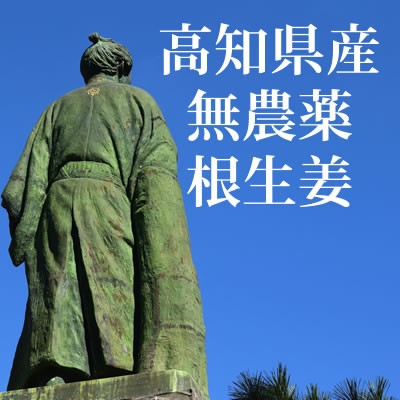 高知県産無農薬生姜1000g