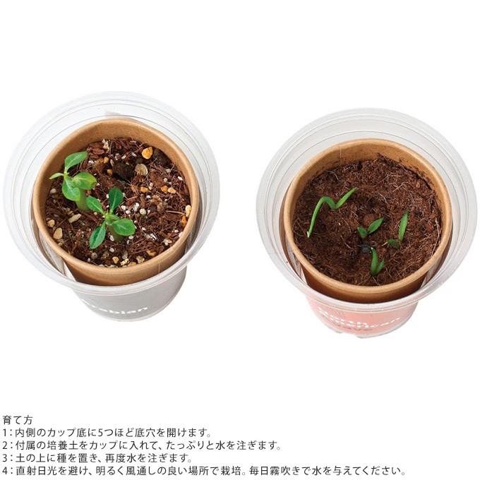 かわいい 栽培セット 世界の植物  栽培キット  簡単 安心 安全 かわいい 気軽 手ごろ 手軽 楽しい