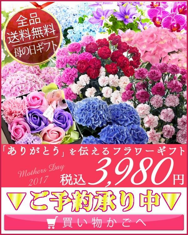 3980鉢花