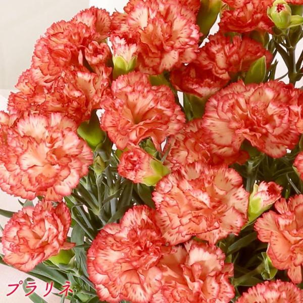 母の日 母の日ギフト2019 花 カーネーション 6号 母の日ギフト2019 母 プレゼント [早割] [19母]|glife-y|08