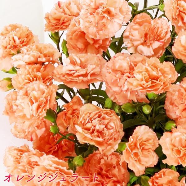母の日 母の日ギフト2019 花 カーネーション 6号 母の日ギフト2019 母 プレゼント [早割] [19母]|glife-y|10