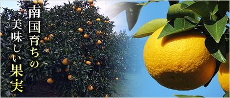 南国育ちの美味しい果実