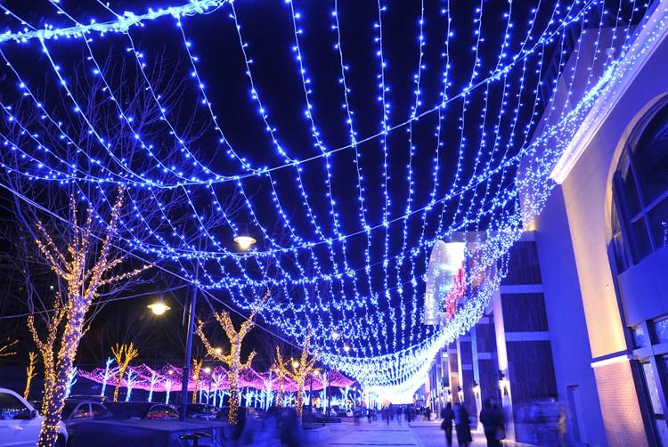 クリスマスローズ クリスマス ストレート 屋外