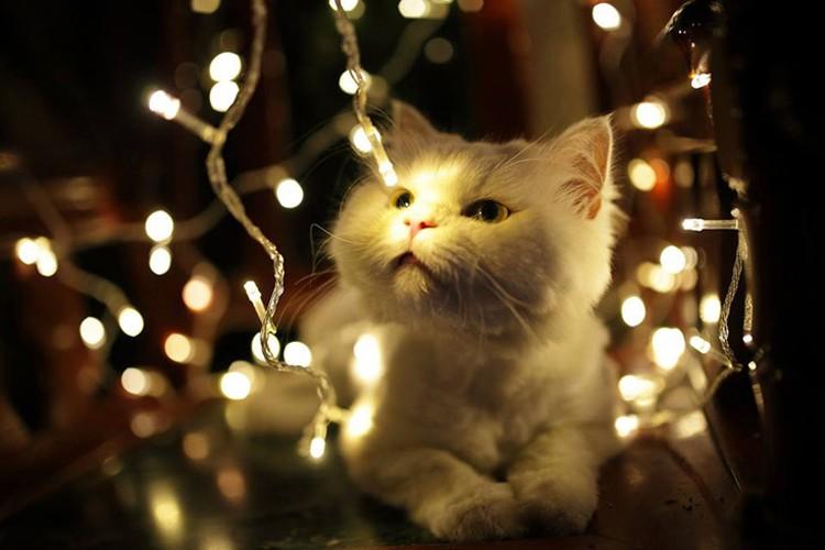 LEDイルミネーション ストレート クリスマス飾り 500球 30M 青 白 黄 紫 緑 RGBミクス