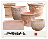白粉素焼き鉢(テラコッタ鉢)