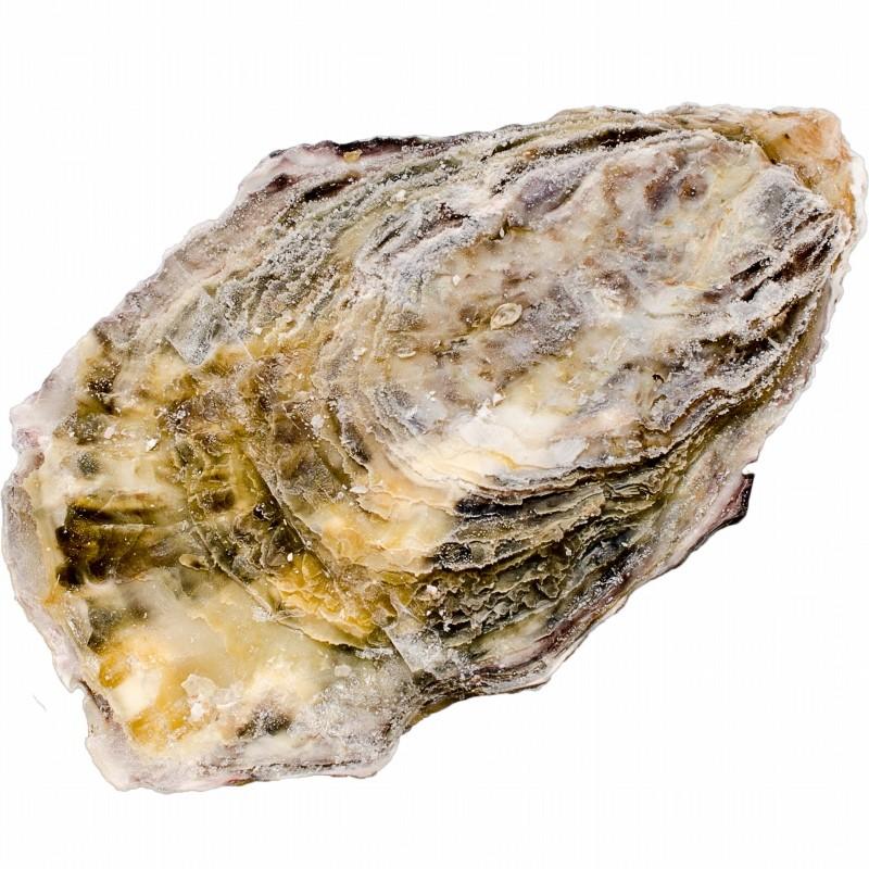 殻付き牡蠣 殻単体