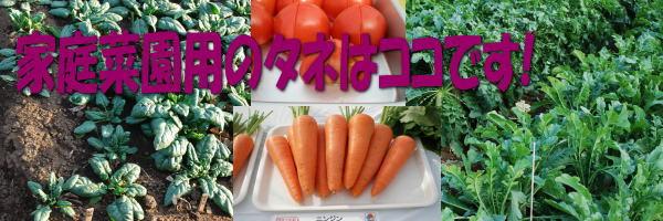 家庭用野菜の種