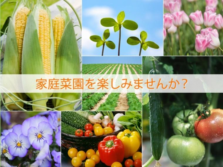 家庭菜園を楽しみませんか?