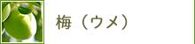 梅(ウメ)