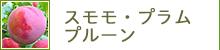 スモモ/プラム/プルーン