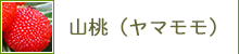山桃(ヤマモモ)