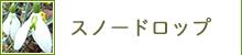 スノードロップ