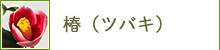 椿(ツバキ)