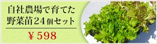自社農場で育てた野菜苗24個セット \598