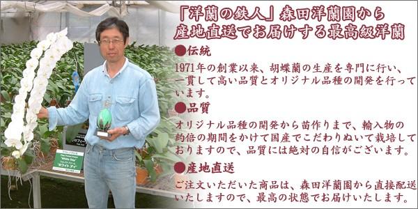 森田洋蘭園説明