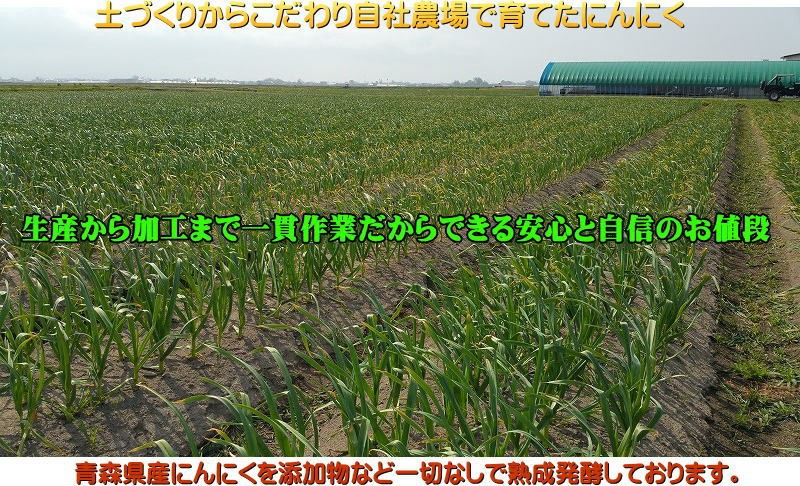 【黒ニンニク栽培】-2