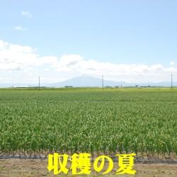 津軽にんにく つがる市 夏