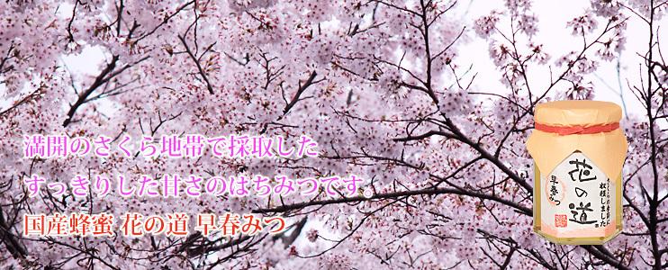 早春みつ(さくら)